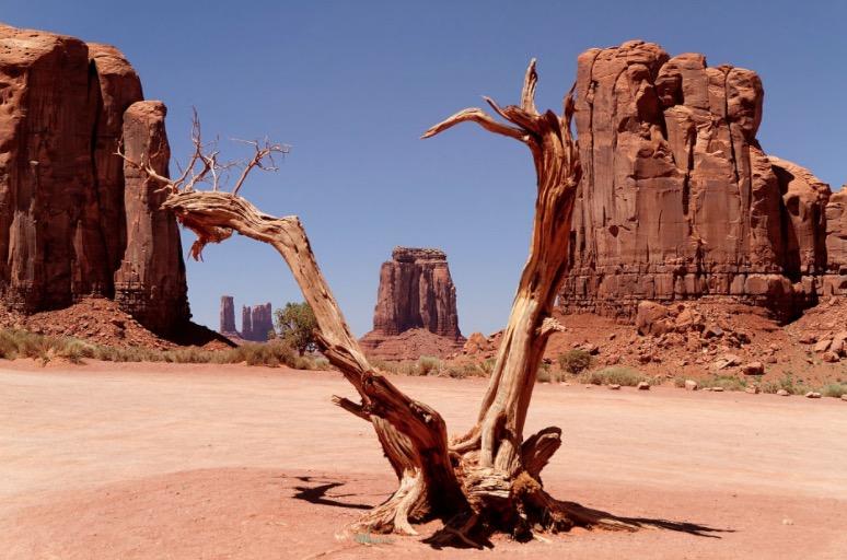 Wüste mit vertrocknetem Baumstamm