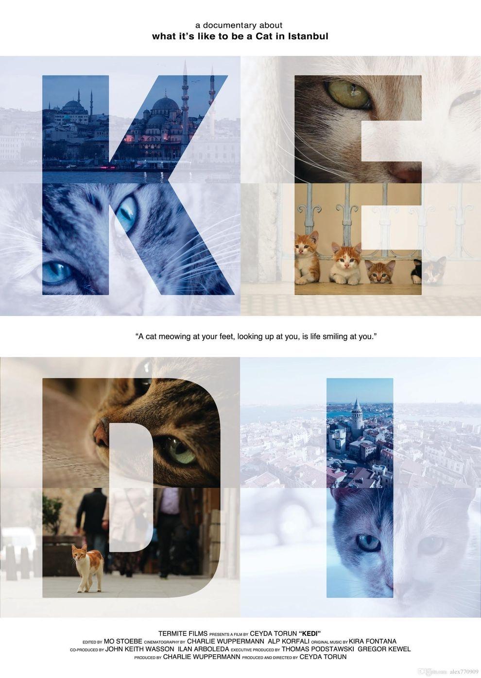 Kedi - Von Katzen und Menschen (Poster)
