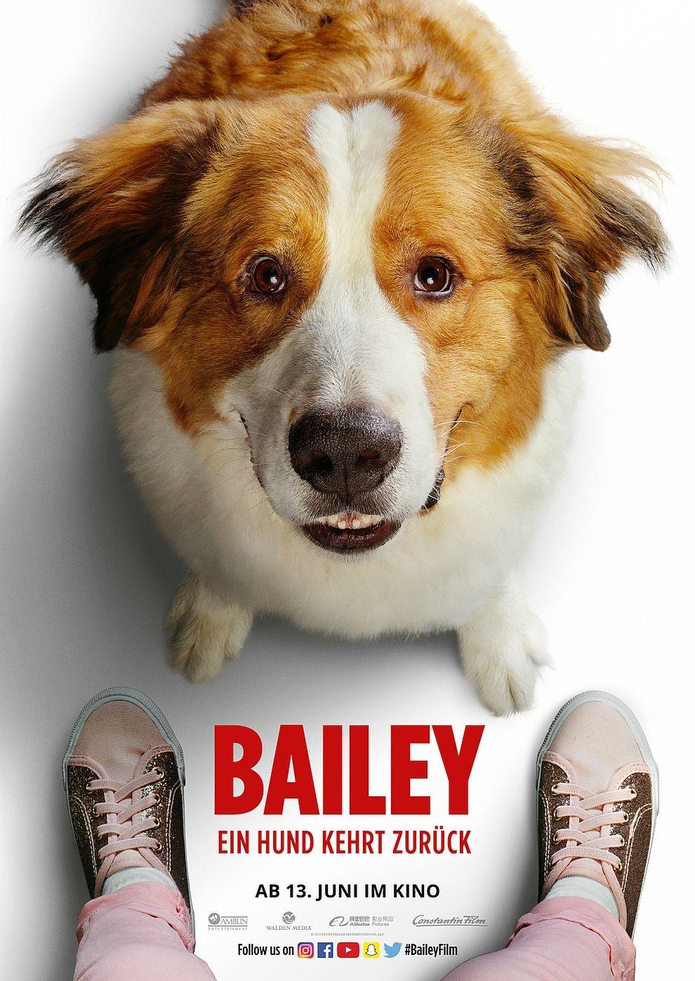 Bailey - Ein Hund kehrt zurück (Poster)