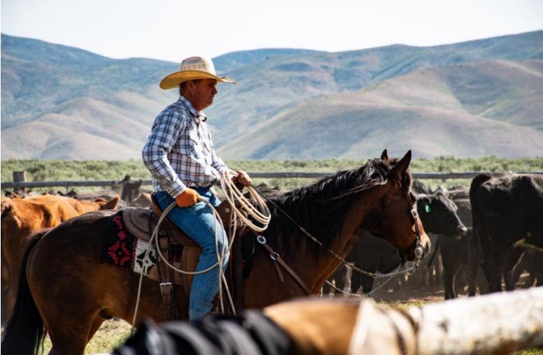 Cowboy auf Pferd